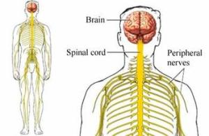 Tanda dan Gejala Guillain Barre Syndrome